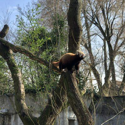 artis zoo amsterdam